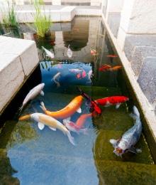 Zwemvijver opbouw soorten prijs advies for Koivijver aanleggen tips